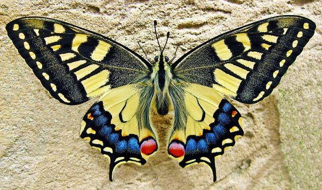 Flieger Schmetterling Basteln Kindergeburtstagorat