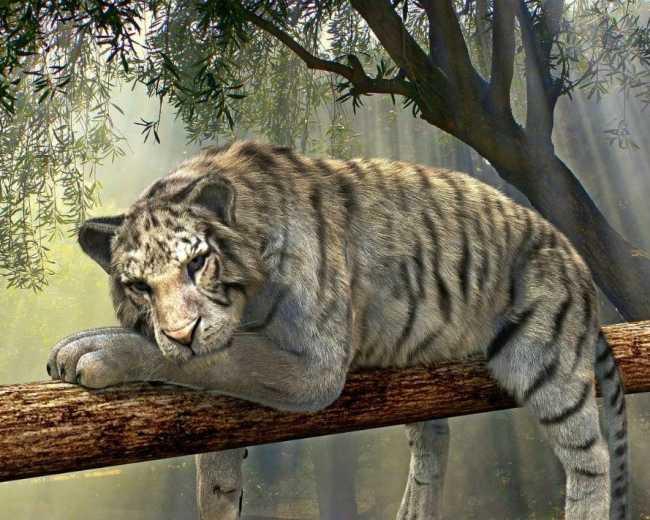 Tiger_Dschungelparty